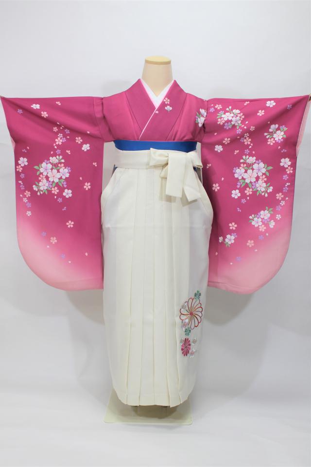芦屋出張着付けの2 赤紫地に桜の二尺袖着物